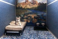 St. Louis Luxury Pet Boarding