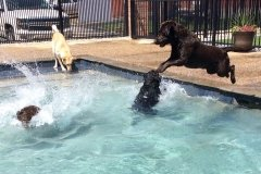 Dog Swimming Pool in St. Louis