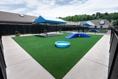 Doggie Day Camp in St. Louis