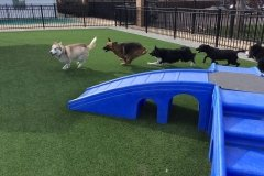 Doggie Day Care in St. Louis