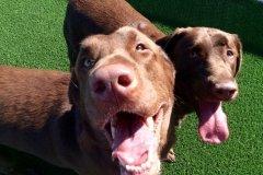 Doggie Daycamp Services