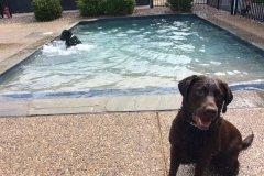Doggie Day Camp - Swimming Pool