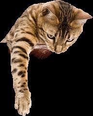 Pet Boarding in St. Louis | Cat Hotel