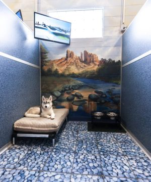 Luxury Suites | St. Louis Dog Boarding