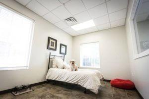 Penthouse Suite | St. Louis Dog Boarding