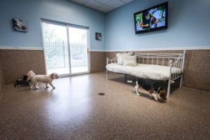 Slumber Suites | St. Louis Dog Boarding