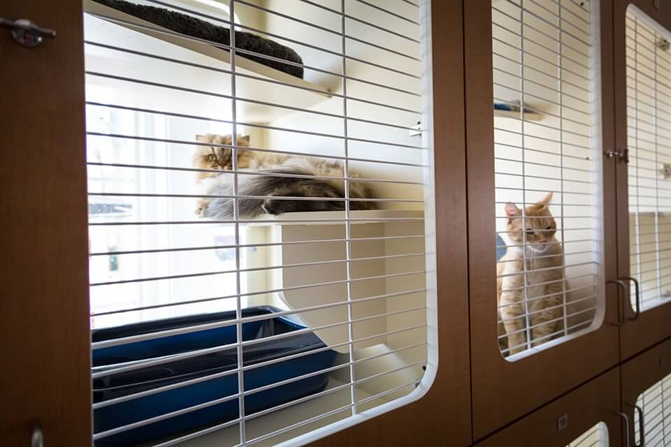St. Louis Cat Boarding Kennel