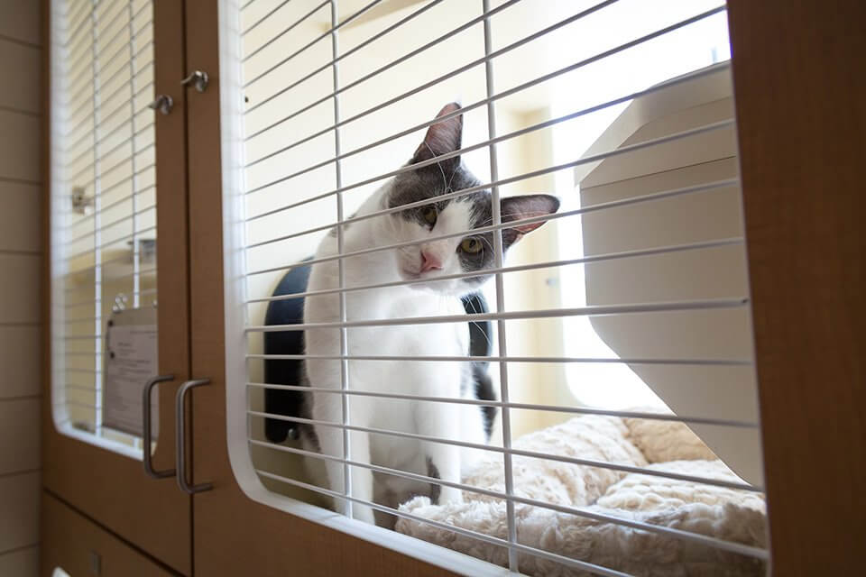 St. Louis Cat Boarding Services