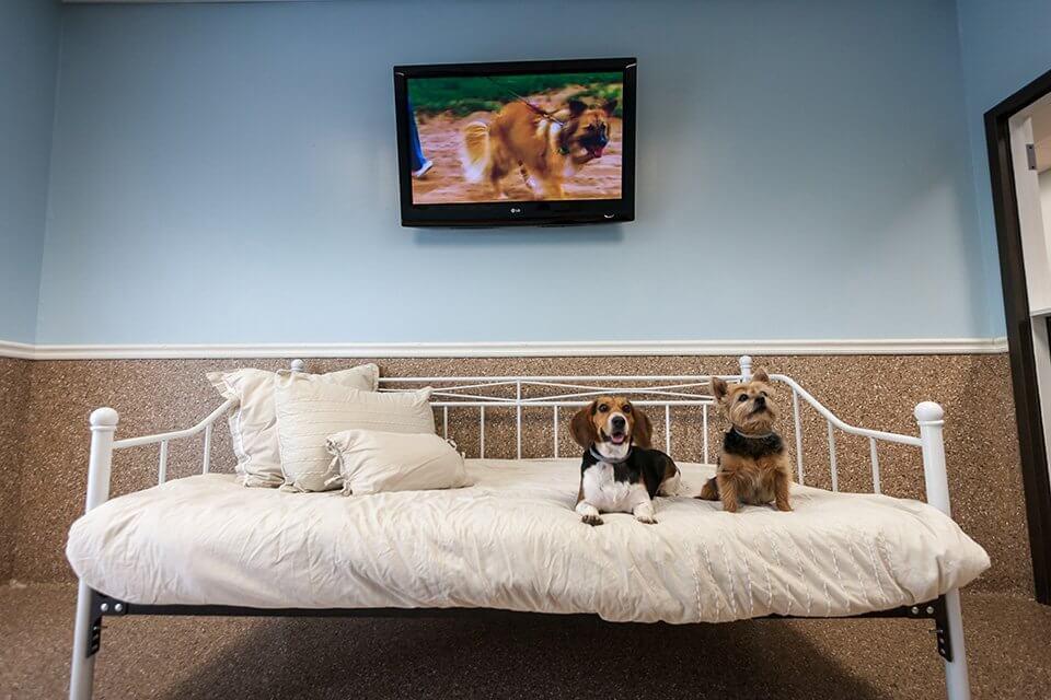 Dog Boarding | St. Louis Pet Hotel