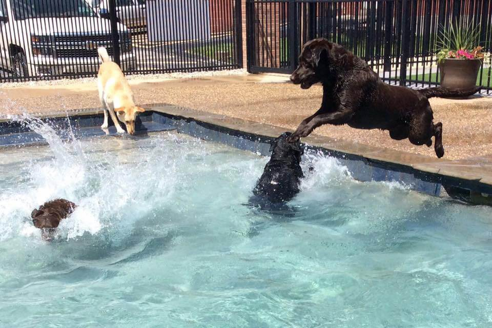Dog Swimming Pool Doggie Pool Dog Hotel Dog Boarding St Louis Chesterfield