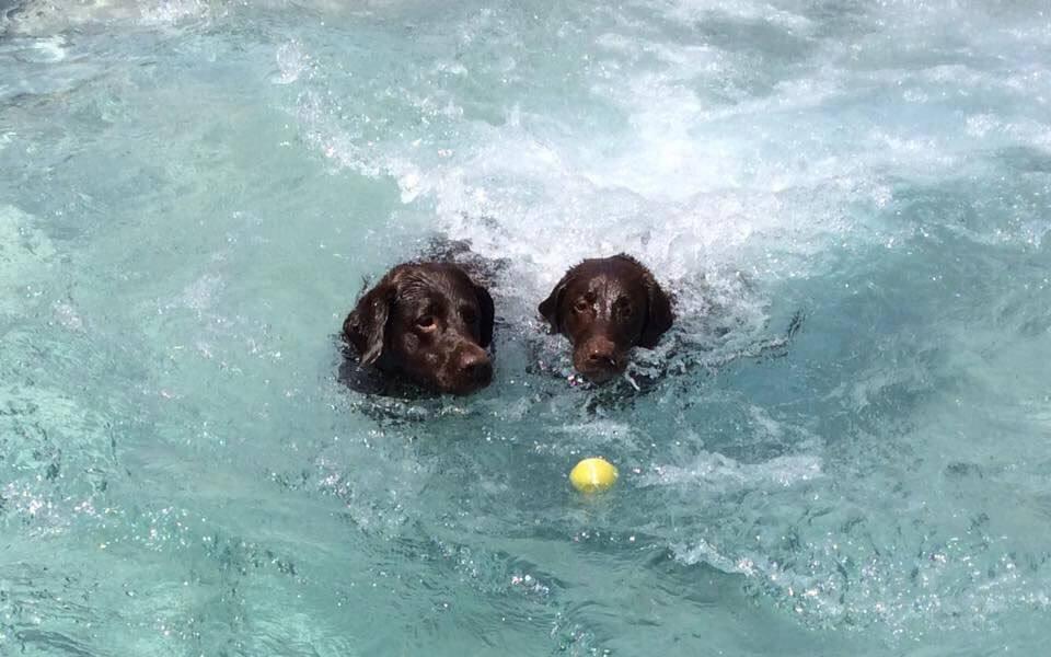 Dog Swimming Pool   Doggie Pool   Dog Hotel   Dog Boarding   St ...