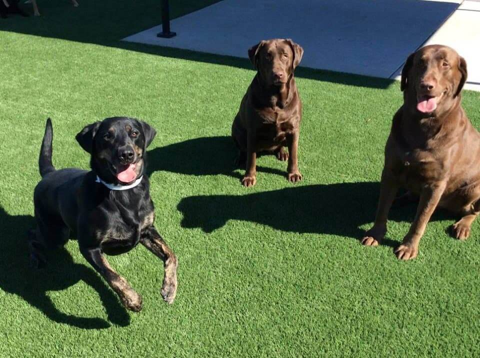 St. Louis Doggie Daycamp & Day Care
