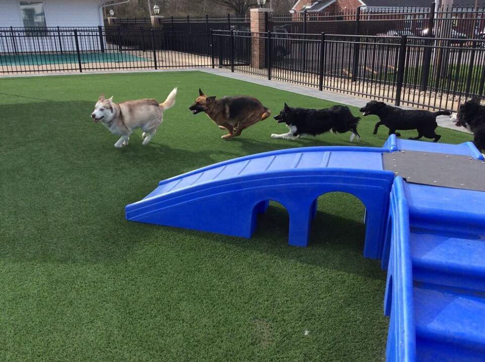 Doggie Daycamp Services in St. Louis
