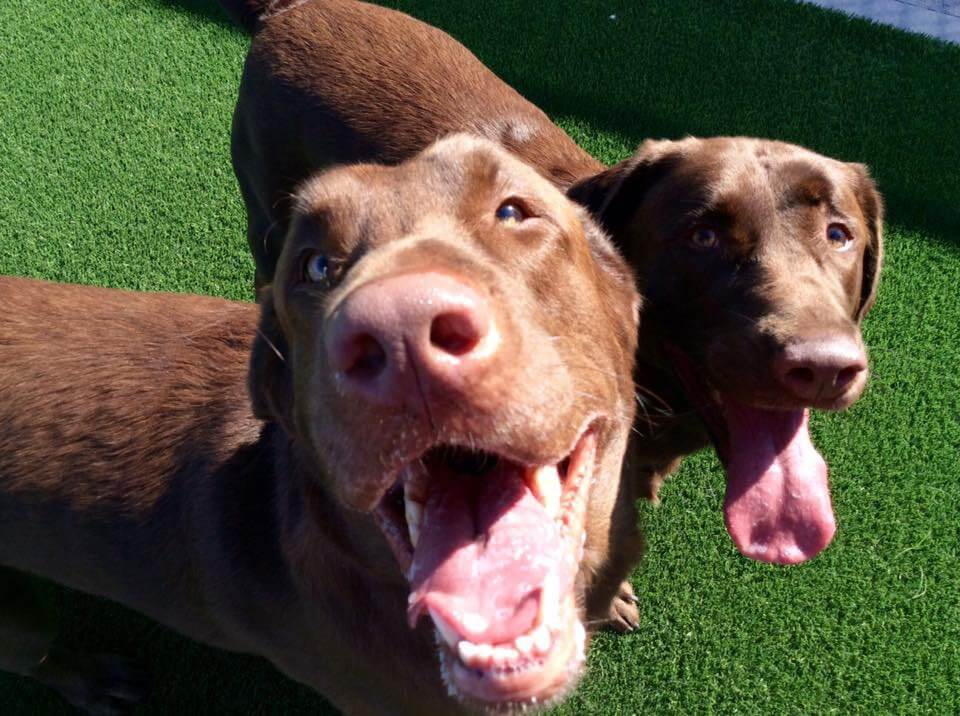Doggie Daycamp | Day Care for Dogs & Puppies