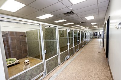 What To Look For In A Boarding Facility Williamsburg Pet