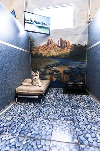 St. Louis Pet Boarding Facility