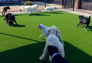 Doggie Daycamp - Outdoor Facilities