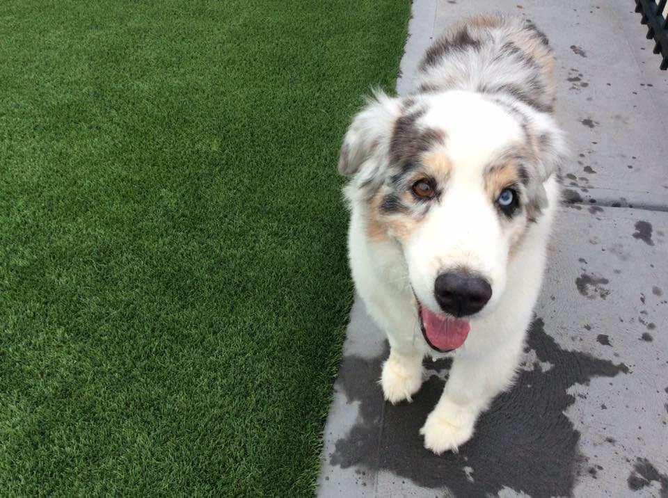 Pet Kennel |  Dog & Cat Boarding in St. Louis