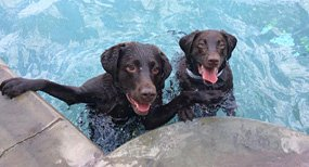 St. Louis Dog Swimming Pool & Pet Boarding