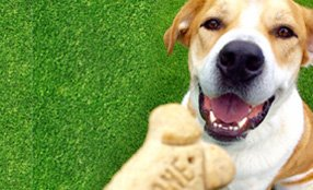 Dog Training Classes in St. Louis